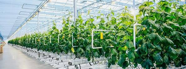 Modern Farm Indoor Agriculture