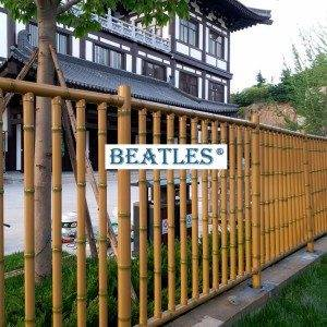Metal bamboo canes for garden screen and fence