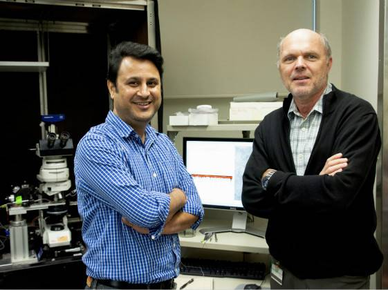 Scientists (dis)solve a century-long mystery to treat asthma and airway inflammation