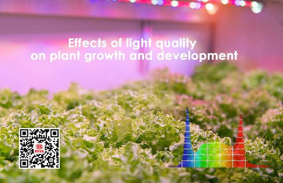 Effects of light quality on plant growth and development