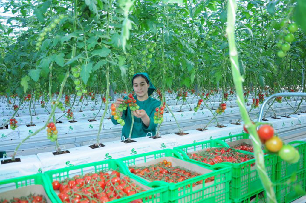 Turkmenistan: Five-hectare high tech greenhouse launched