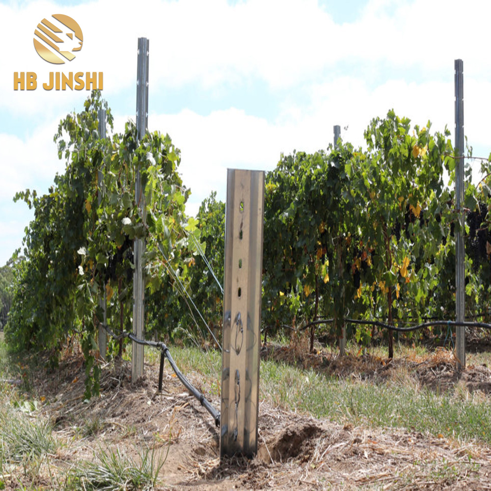 Galvanized Posts for Vineyards & Orchards factory in China