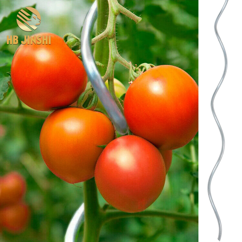 Greenhouse tomato spiral plant stake 1.8m tomato seedling growing climbing support