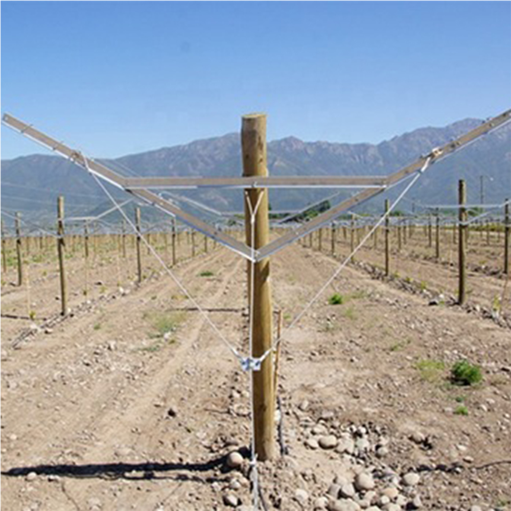 Quality Vineyard Open Gable Trellis System Manufacturer