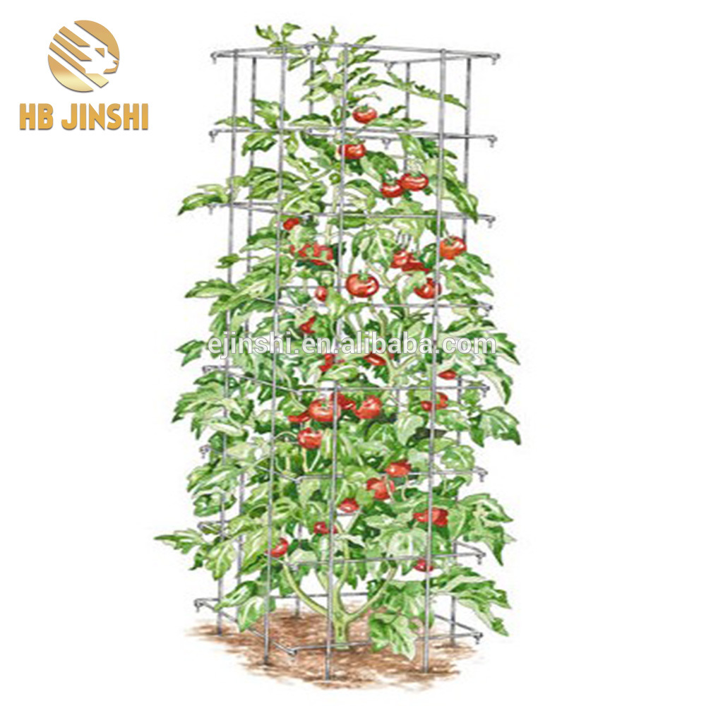 Square tomato tower