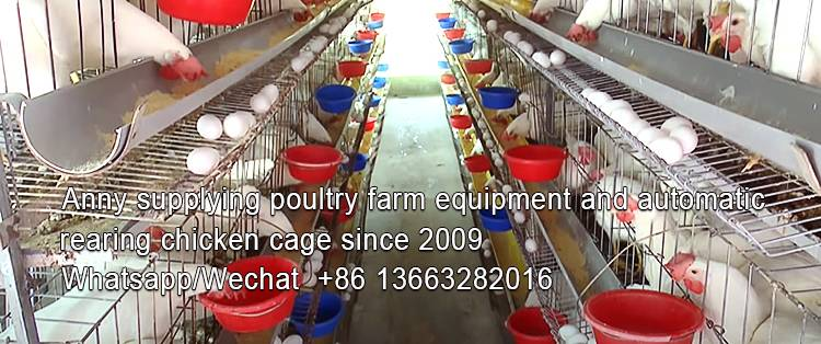 Key things you need to know about manual broiler cages