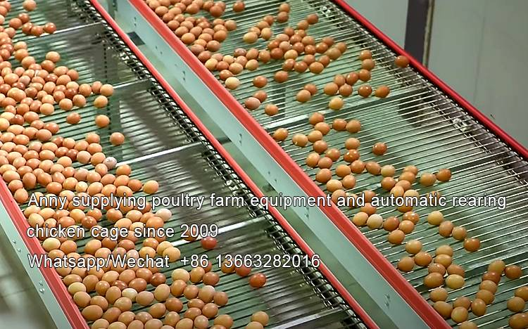 Difference between battery layer cage and broiler cage