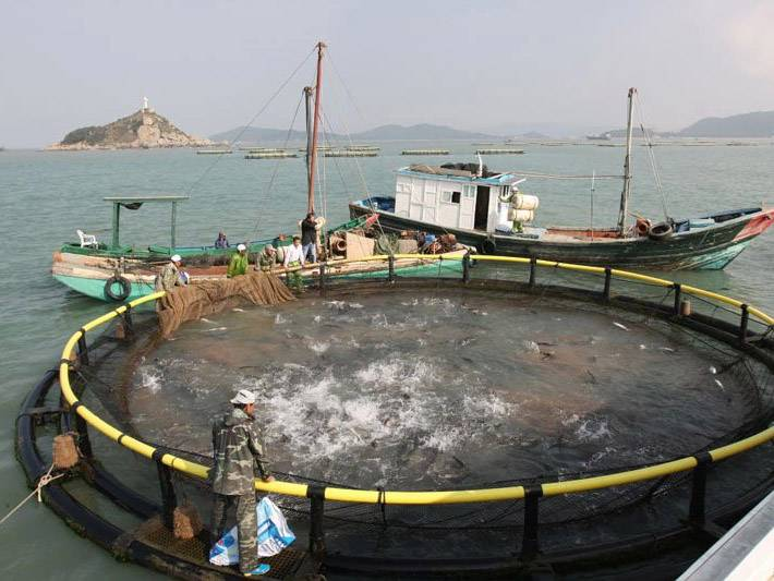 OEM China Marine Aquaculture Knotted Net -