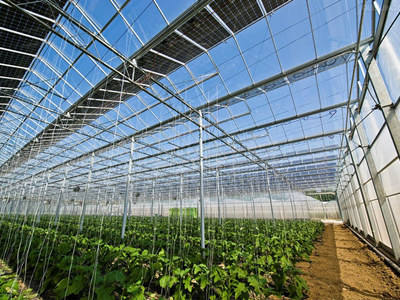 Chinese Professional Solar Module Mounting Structure Design Pv Agriculture Greenhouse Tianfon China Henan Tianfon New Energy