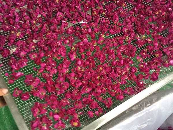 rose drying machine1