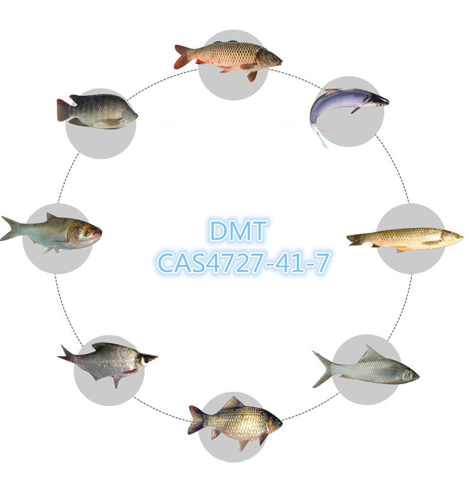 DMT fish feed additive