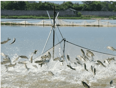 Organic acids for aquaculture