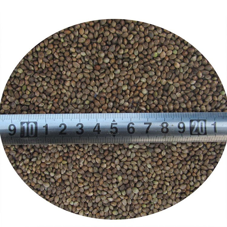 Hulled Hemp Seed Min 55% Oil Content Pure Organic Hemp Seeds for Sale Featured Image