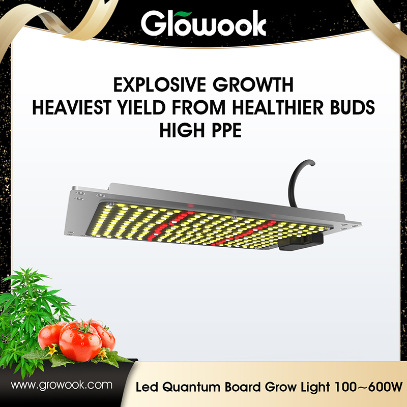 LED Quantum board 100W-600W Featured Image