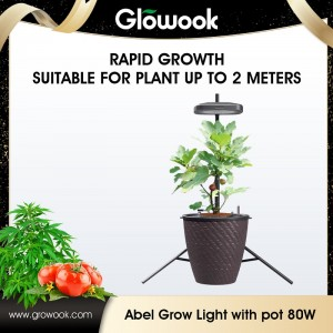 آبل Growlight 80W