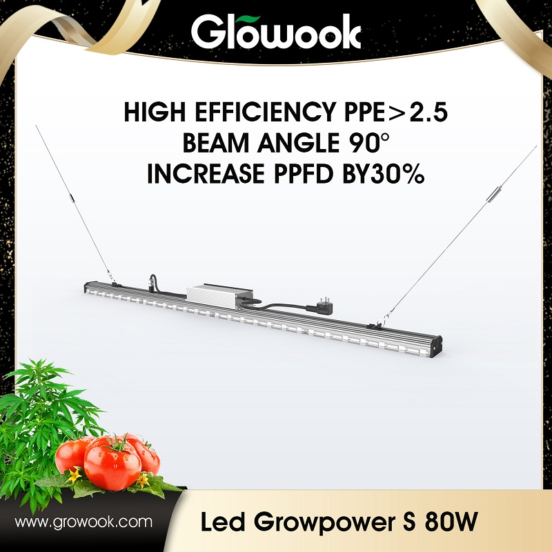 Factory Promotional Grow Tent Kit With Led Lights -