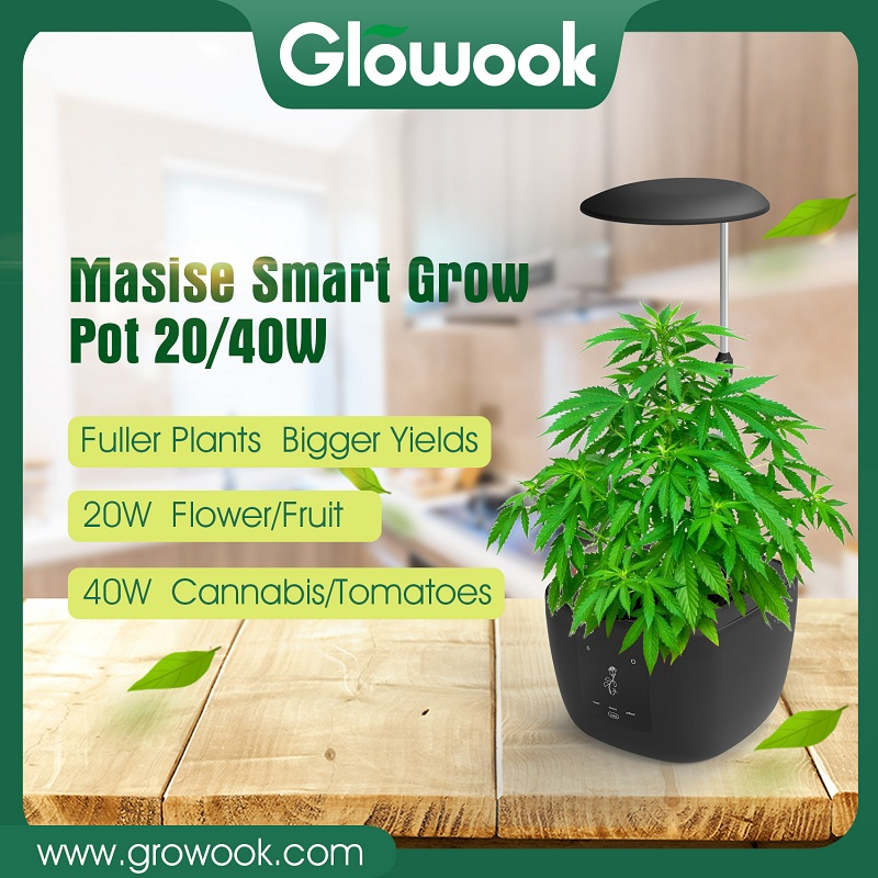 Maisie smart growpot;hydeoponic grow pot and led grow lamp; Featured Image