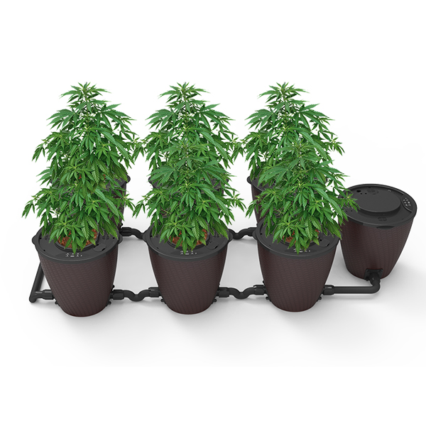 Hot New Products Hydroponic Grow Systems -