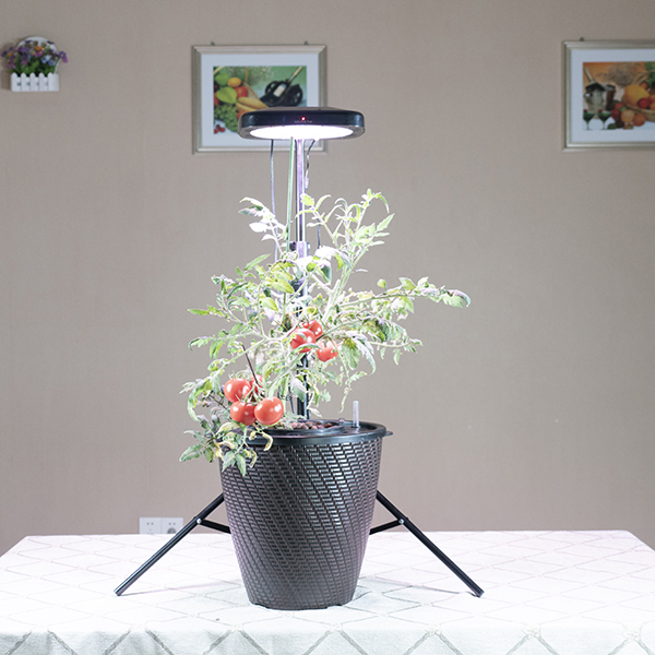 China New ProductUfo Grow Lamp -