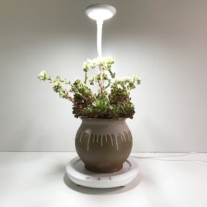 EVA desk grow light