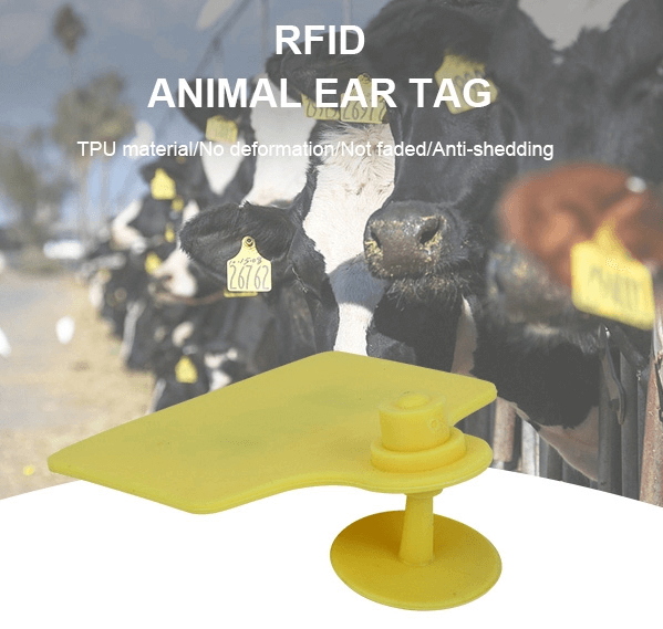 GSRFID supply RFID Animal Tags for Sichuan Government and Discuss Management Solution
