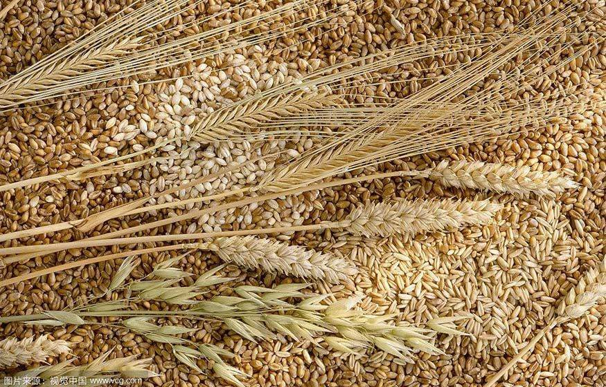 different kinds of wheat