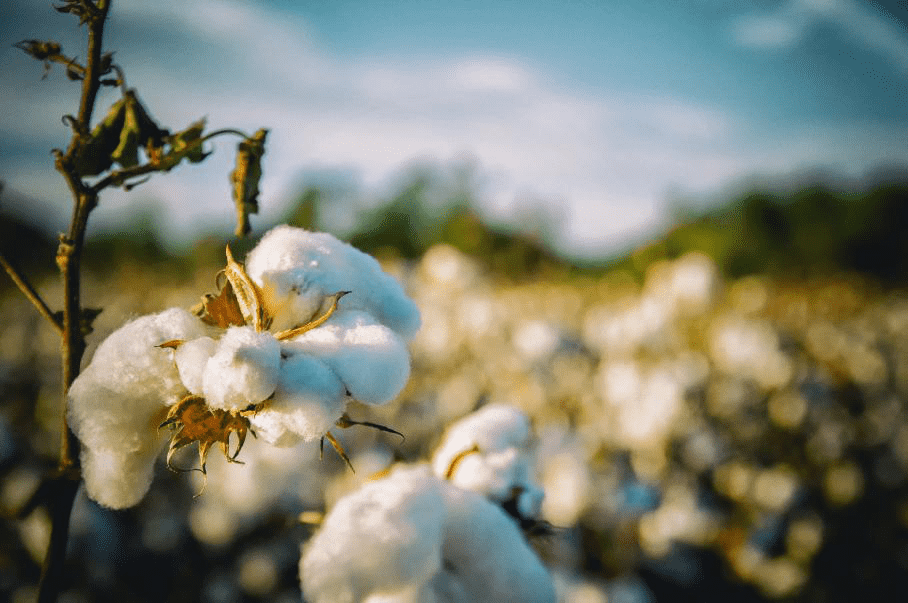 What effect does temperature and humidity have on cotton? It's important!