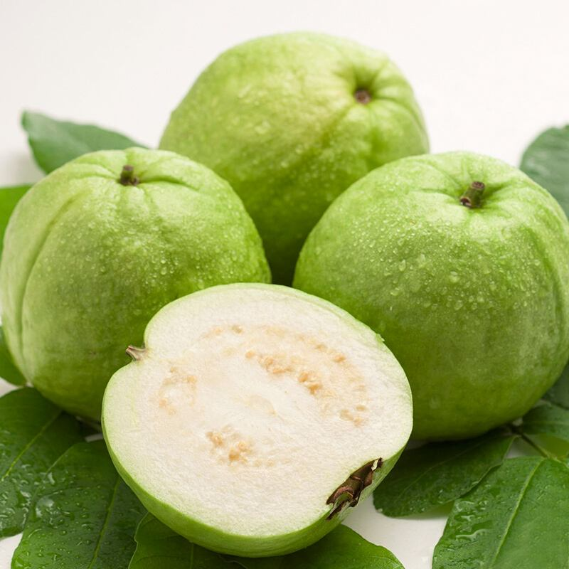 High Performance Gaba Cas 56-12-2 -