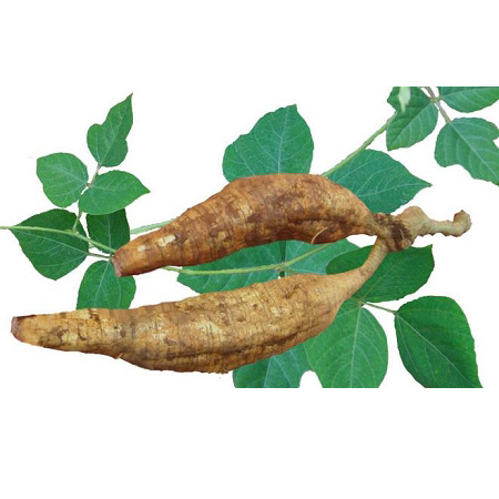 Kudzu Root Extract Featured Image