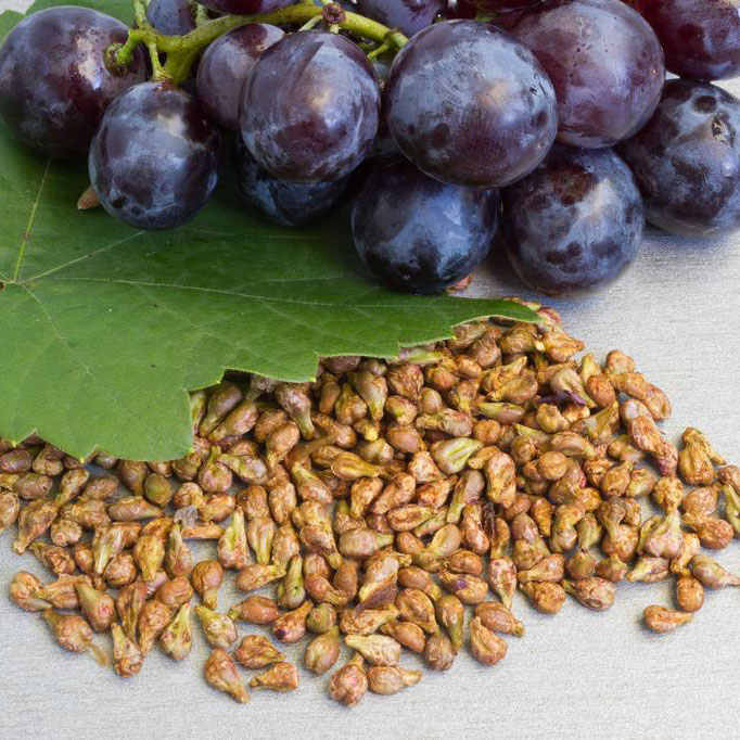Factory Cheap Hot Oligomeric Proanthocyanidin -