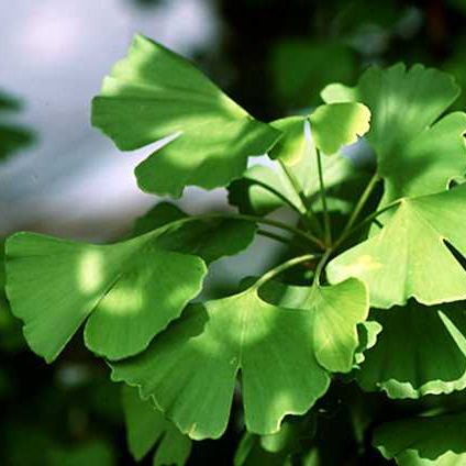 Factory directly Food Addictive -