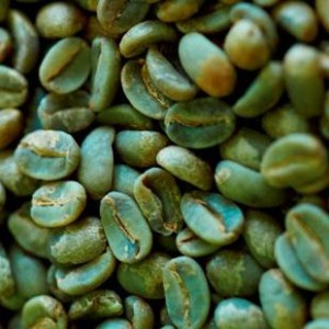 Green coffee bean nencindi