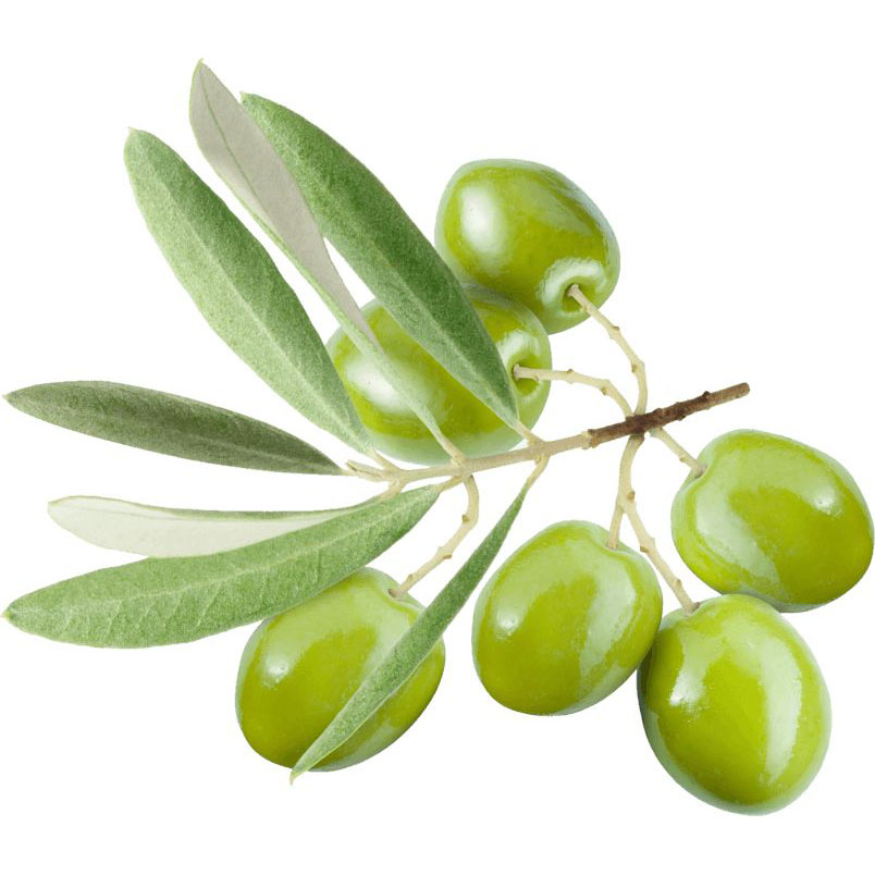 Olive Leaf Extract Featured Image