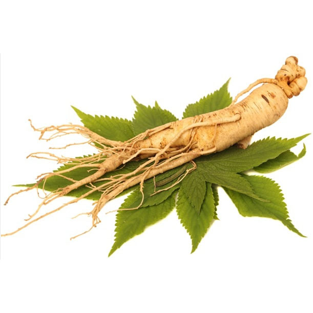Wholesale Price China Thyme Herbal Extract – Ginseng leaf Extract – Chenlv detail pictures