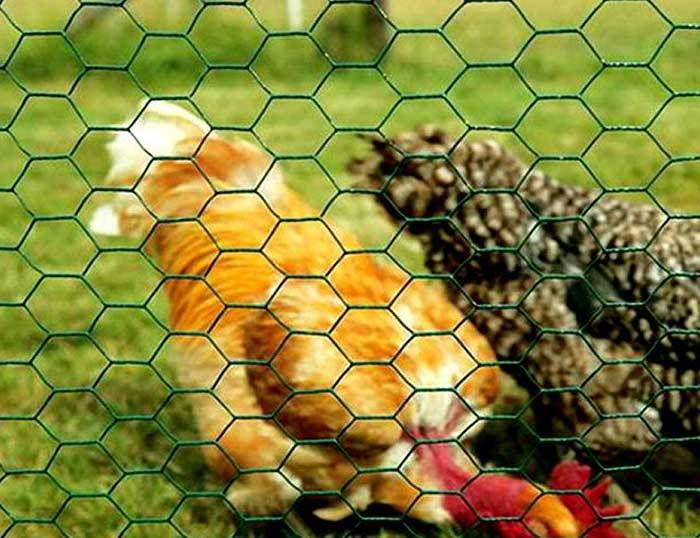Hexagonal terata Netting