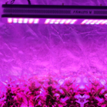 The effect of LED plant lights on the growth of seedlings?