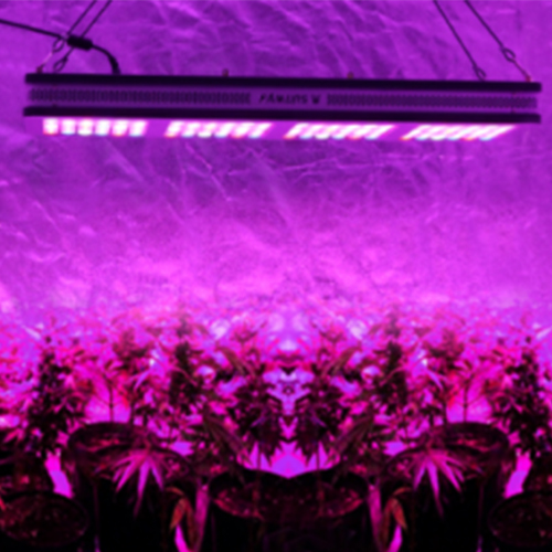 Why is red light mainly used in LED plant lights?