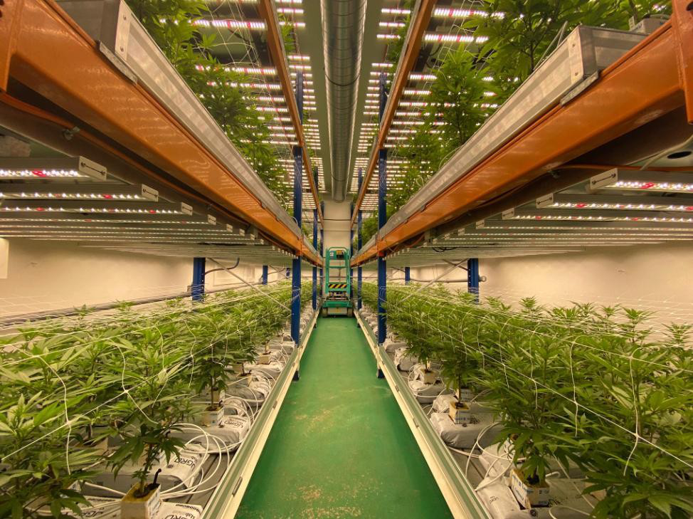 This is an vertical farm in Switzerland, 3 floors of the stand,have 2 rooms,Each room use 36 pcs led grow lights 640W, And the average ppfd of 640W reachs 1002 average PPFD in 6 inch.