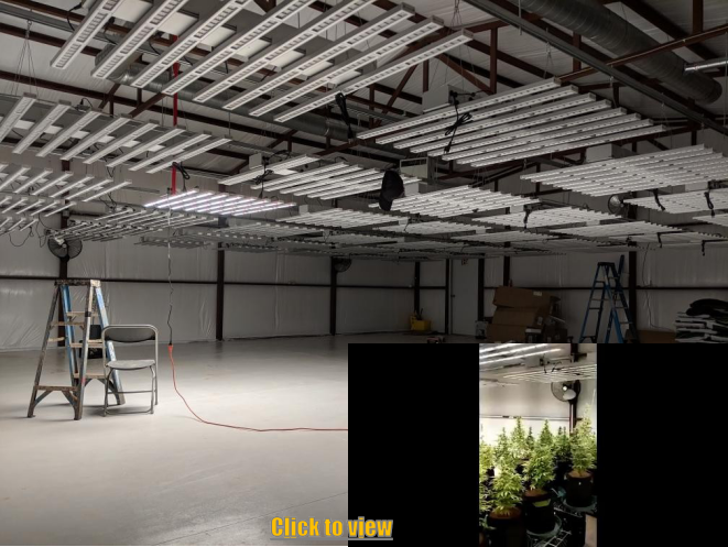 This is a warhouse growth in USA, using 80 pcs 640W for one room. Each light coverage is 5*5ft with high uniform PPFD
