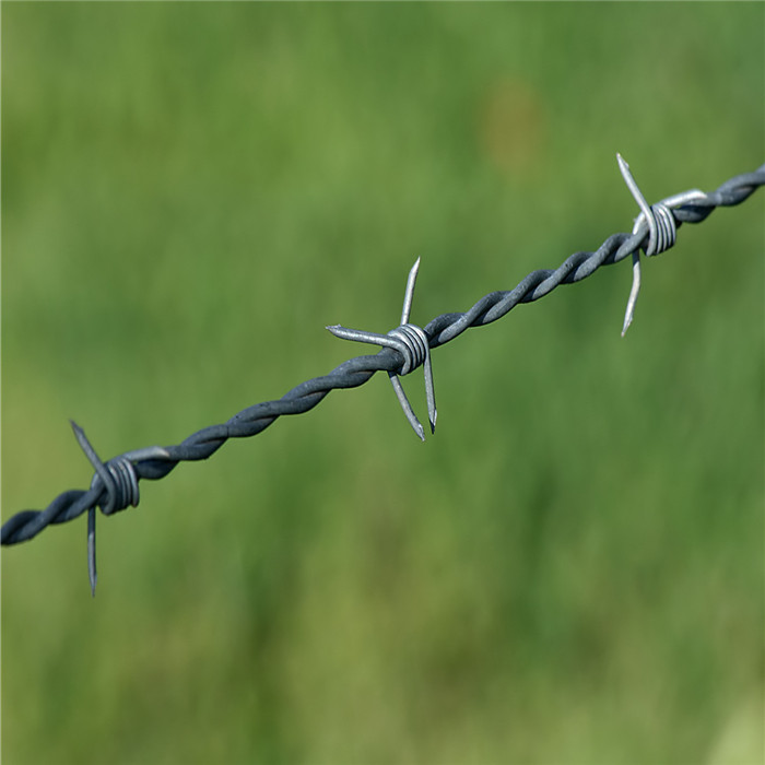 Electro Galvanized Barbed Wire Featured Image