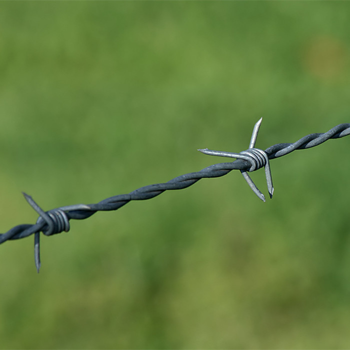 Galvanized Barbed Wire Double Strand Reverse Twist Featured Image
