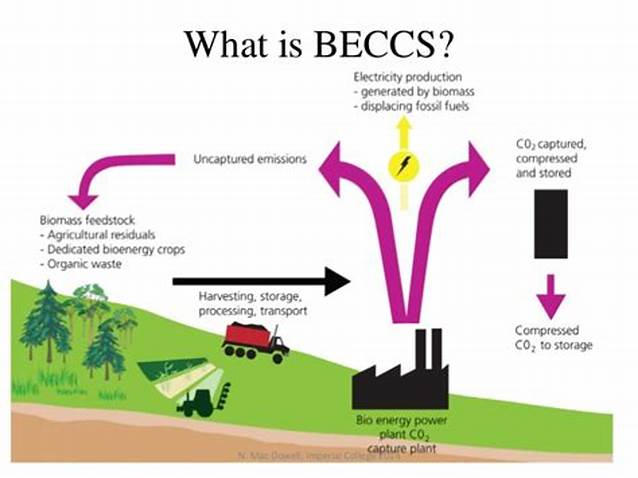 BECCS power generation for China