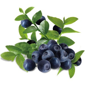 Bilberry extract Picture 1