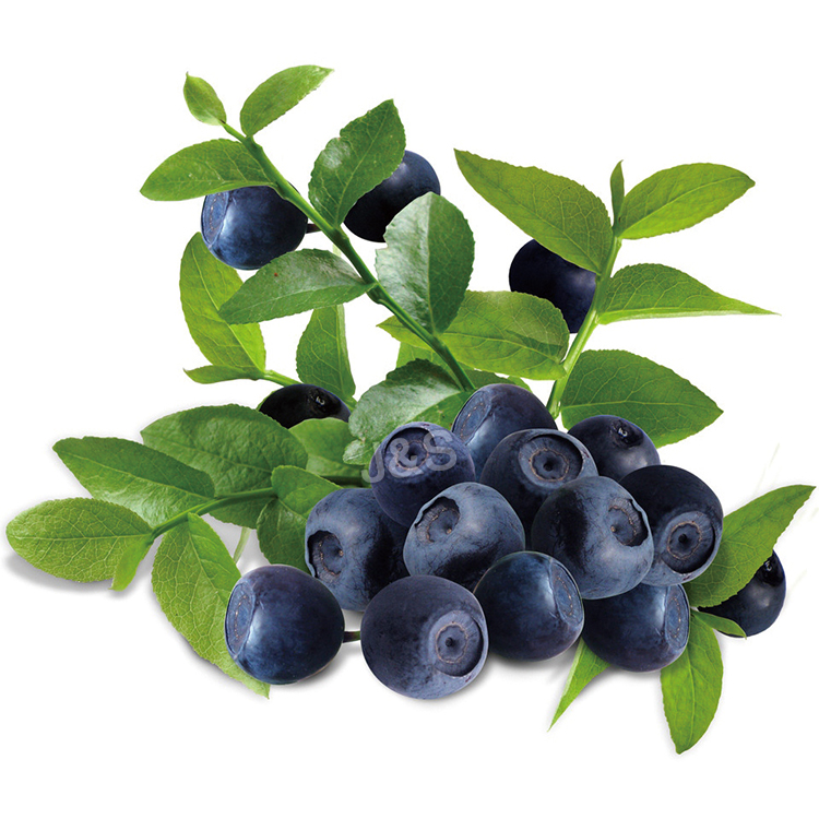 Excellent quality for Bilberry extract Factory for Madagascar