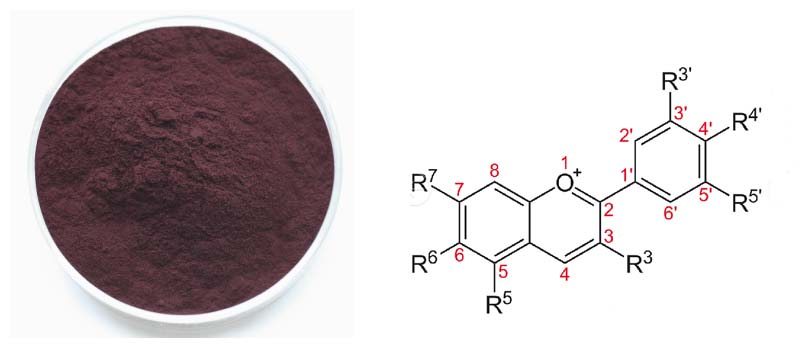 blackcurrant Extract22