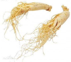 How much you know about American Ginseng?