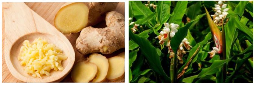 Ginger Root Extract1122