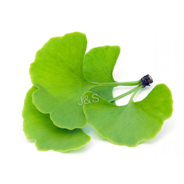 Good quality 100% Ginkgo Biloba Extract Factory from Greece