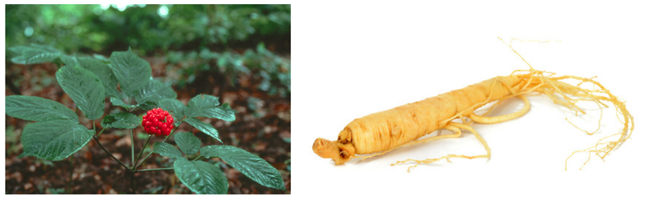Ginseng extract1132221