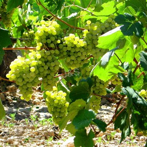 New Arrival China Grape Skin Extract Manufacturer in Liberia